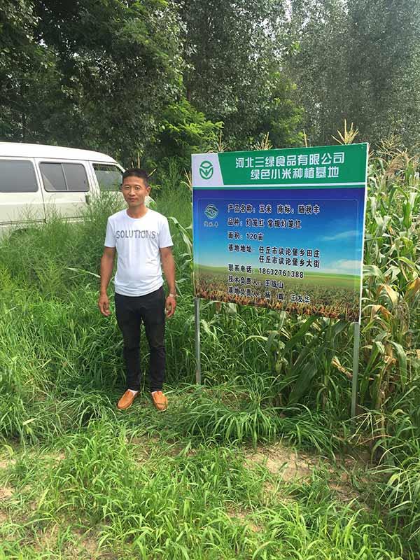 灯笼红玉米种植基地